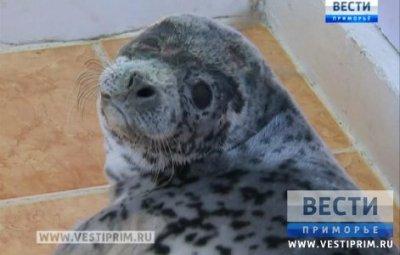 """在""""海豹""""康复中心出现了第一个生病的海洋动物"""