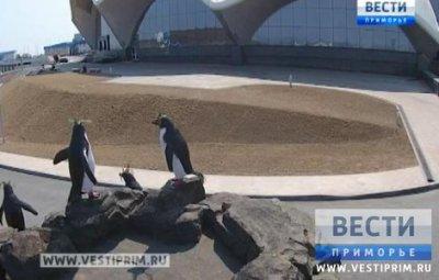 滨海边疆区海洋水族馆举行游览初体验