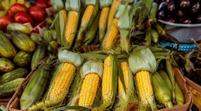 滨海边疆区的农产品将通过符拉迪沃斯托克商港出口到亚洲