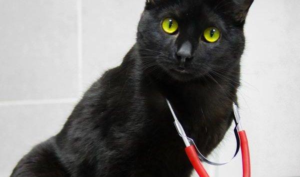 俄彼尔姆宠物诊所一只捐助猫救活八只同伴