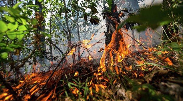 俄滨海边疆区森林火灾面积24小时内扩大近700公顷