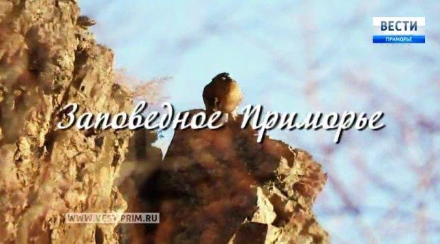 """""""保护滨海边疆区""""电影"""