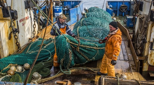 滨海边疆区渔民增加鳕鱼和鰯捕鱼量