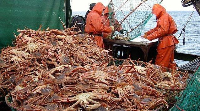 滨海边疆区渔民增加螃蟹捕捞量