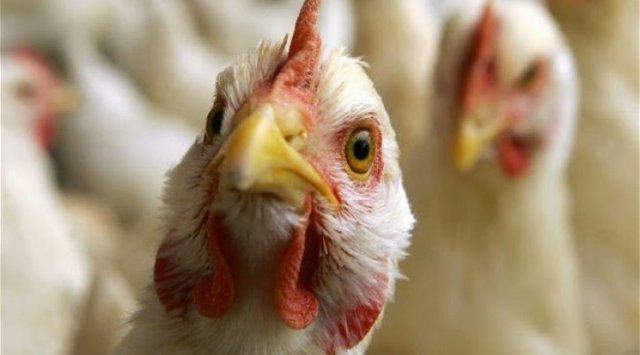 俄农业监管局:滨海边疆区爆发禽流感