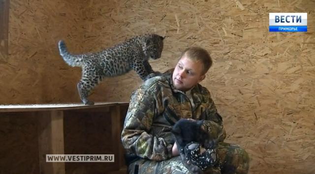 黑豹入住了符拉迪沃斯托克动物园
