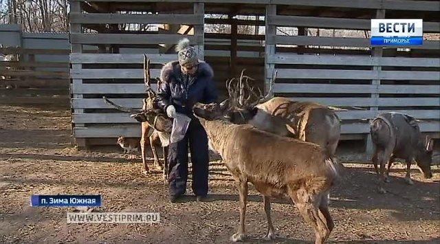 滨海边疆区地区的居民供养自己的动物园