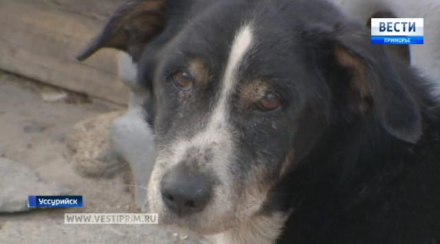 在乌苏里斯克被埋的狗回到了它的主人